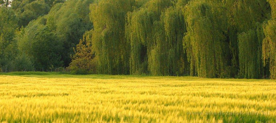Képekben: Abádszalók, Tisza-tó egy tavaszi napon (2016.04.26.)